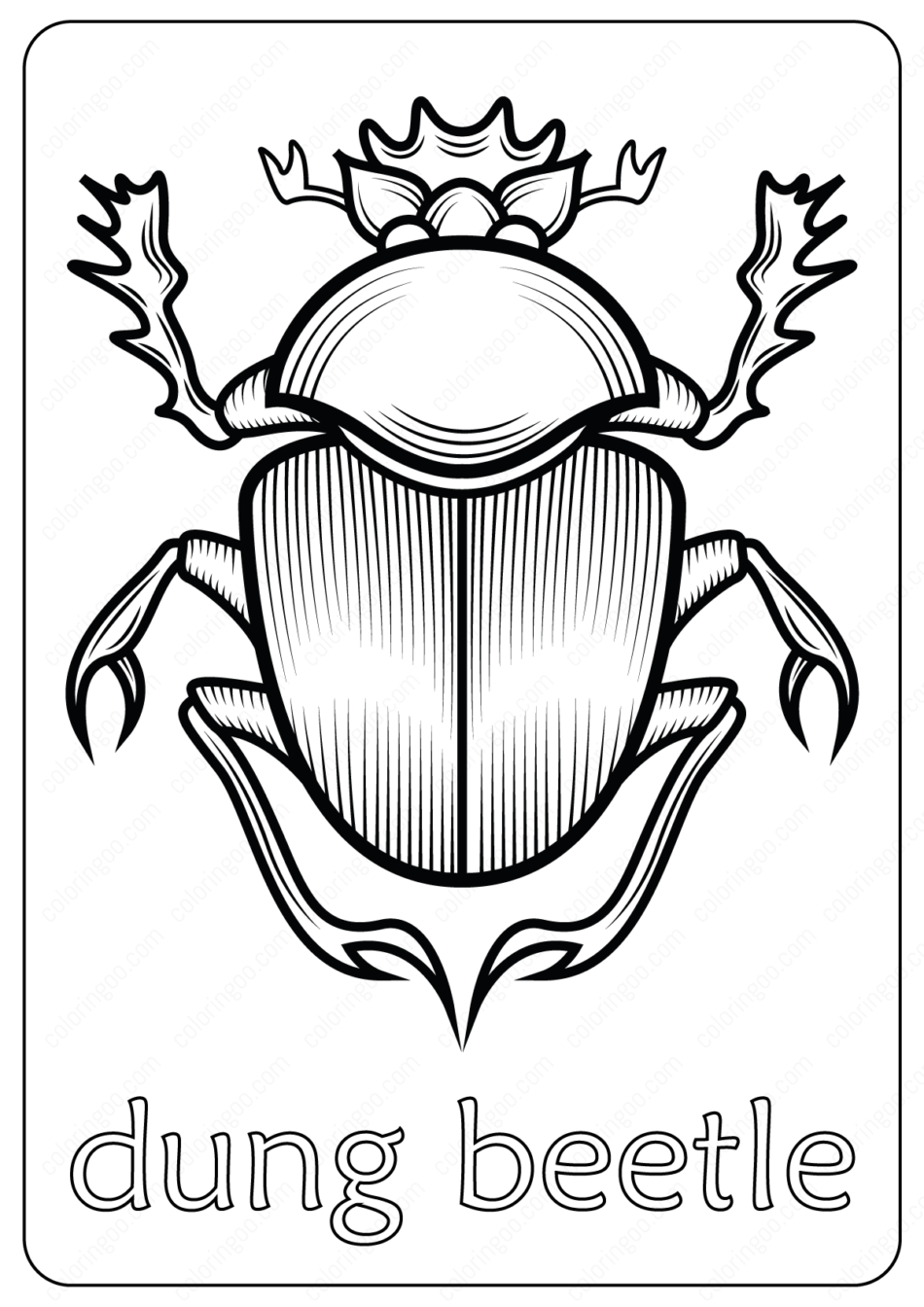 Animals dung beetle Coloring Pages Book
