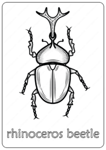 Animals Rhinoceros Beetle Coloring Pages Book