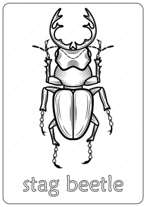 Animals Stag Beetle Coloring Pages Book