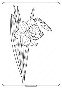 Printable Daffodil Pdf Coloring Page