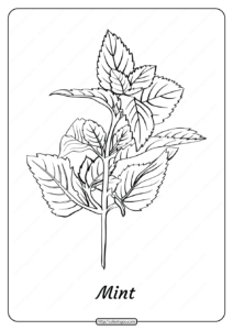 Free Printable Mint Outline Pdf Coloring Page
