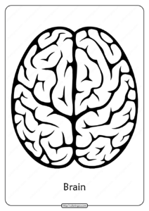 Free Printable Brain Outline Pdf Coloring Pages