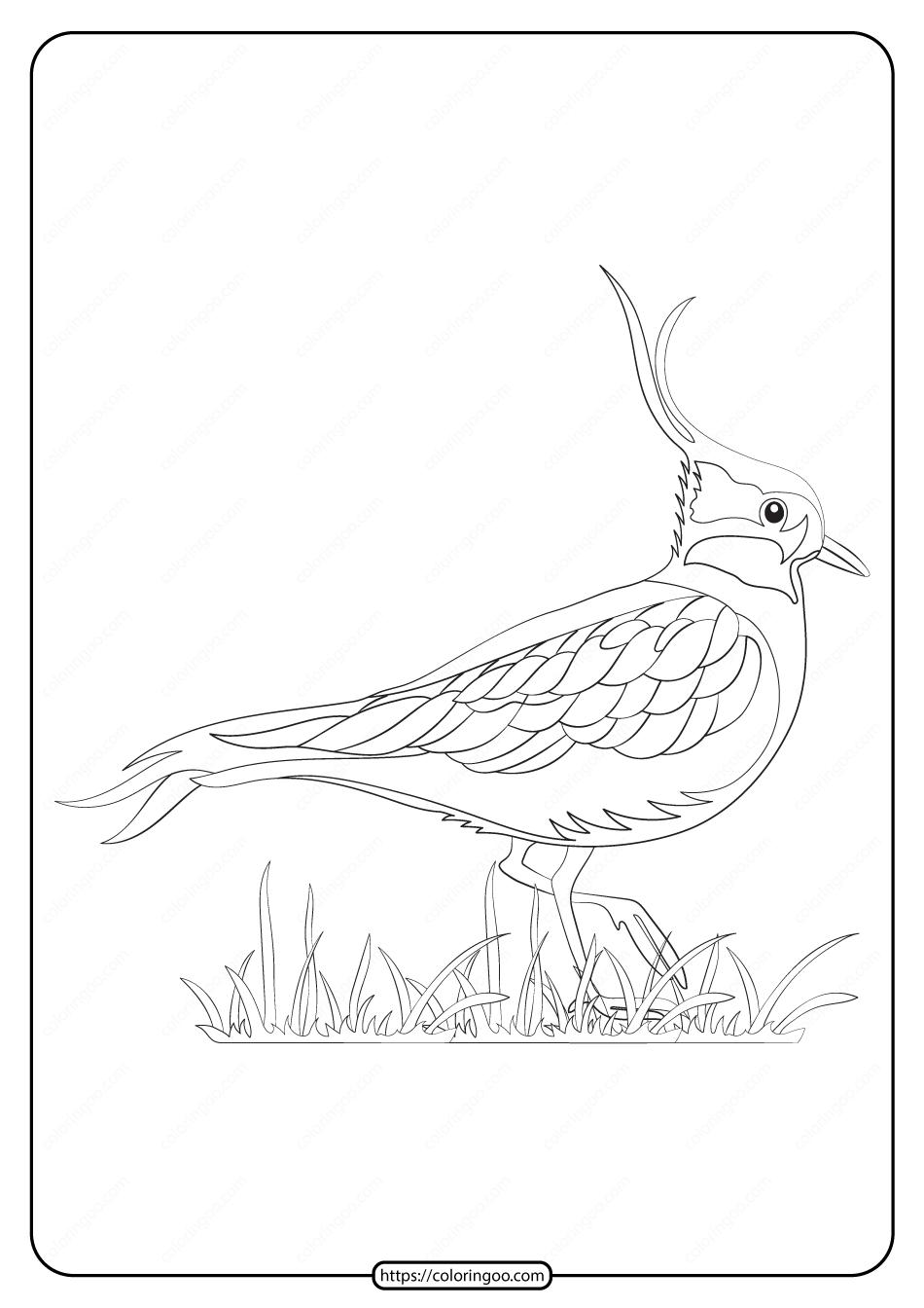 Free Printable Animals Lapwing Pdf Coloring Page