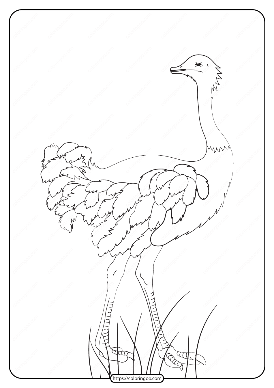 Free Printable Animals Ostrich Pdf Coloring Page