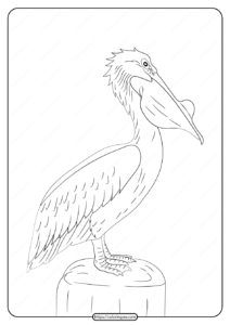 Free Printable Animals Pelican Pdf Coloring Page