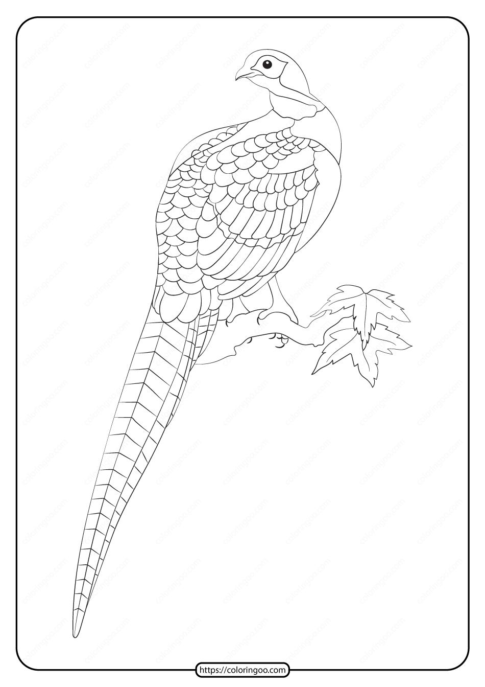 Free Printable Animals Pheasant Pdf Coloring Page