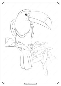 Free Printable Animals Toucan Pdf Coloring Page
