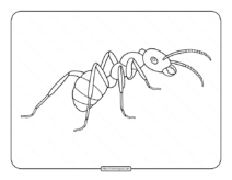 Ant Pdf Coloring Page