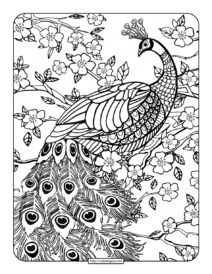 Free Printables Peacock Coloring Page