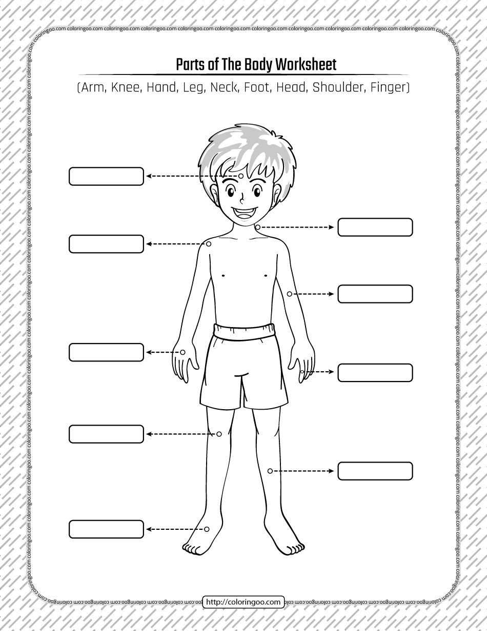 Printable Parts of the Body Pdf Worksheet